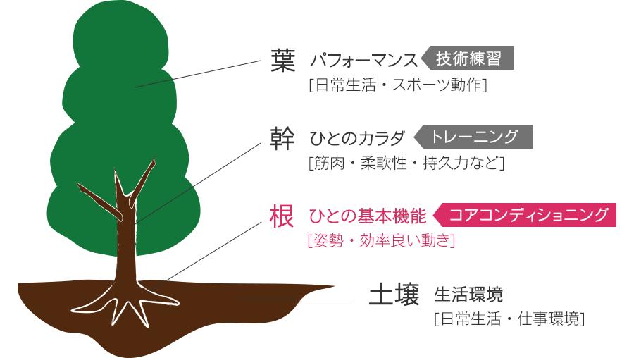 葉   パフォーマンス [日常生活・スポーツ動作] 、幹   ひとのカラダ [筋肉・柔軟性・持久力など]、根   ひとの基本機能 [姿勢・効率良い動き]、土壌   生活環境 [日常生活・仕事環境]